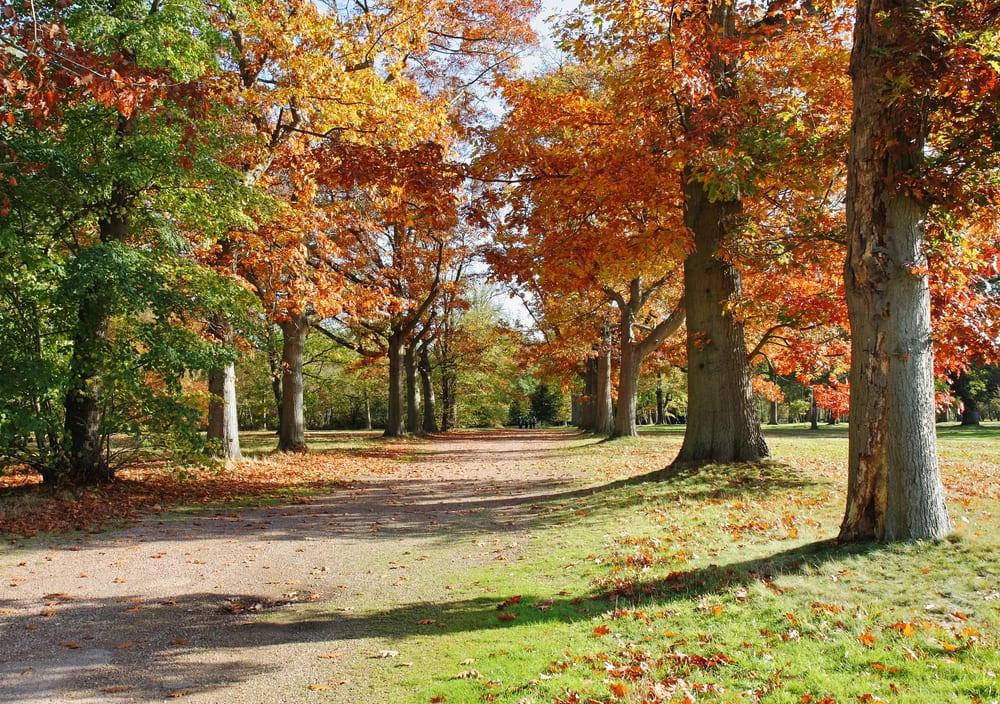 Windsor Great Park